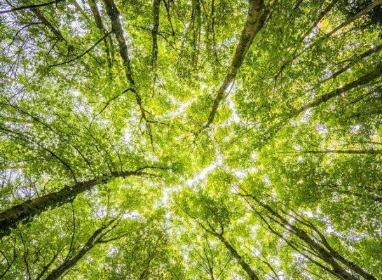 impatto ambientale e donazioni