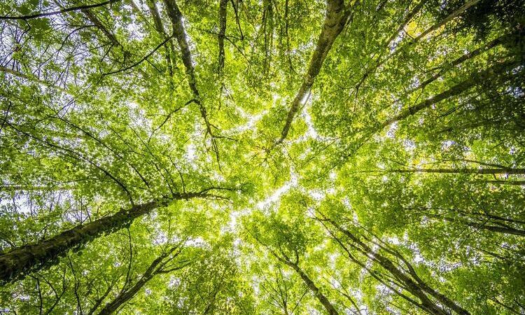 IMPATTO AMBIENTALE E DONAZIONI: come Regusto calcola il risparmio di CO2